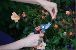 Bahco Hand Pruners: The Best Pruner You've Never Heard Of